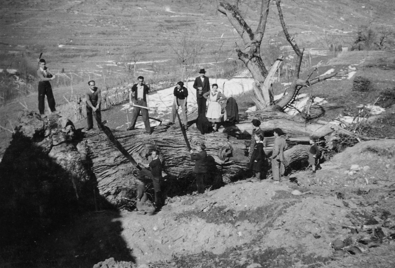1951-taglio-castagni-21